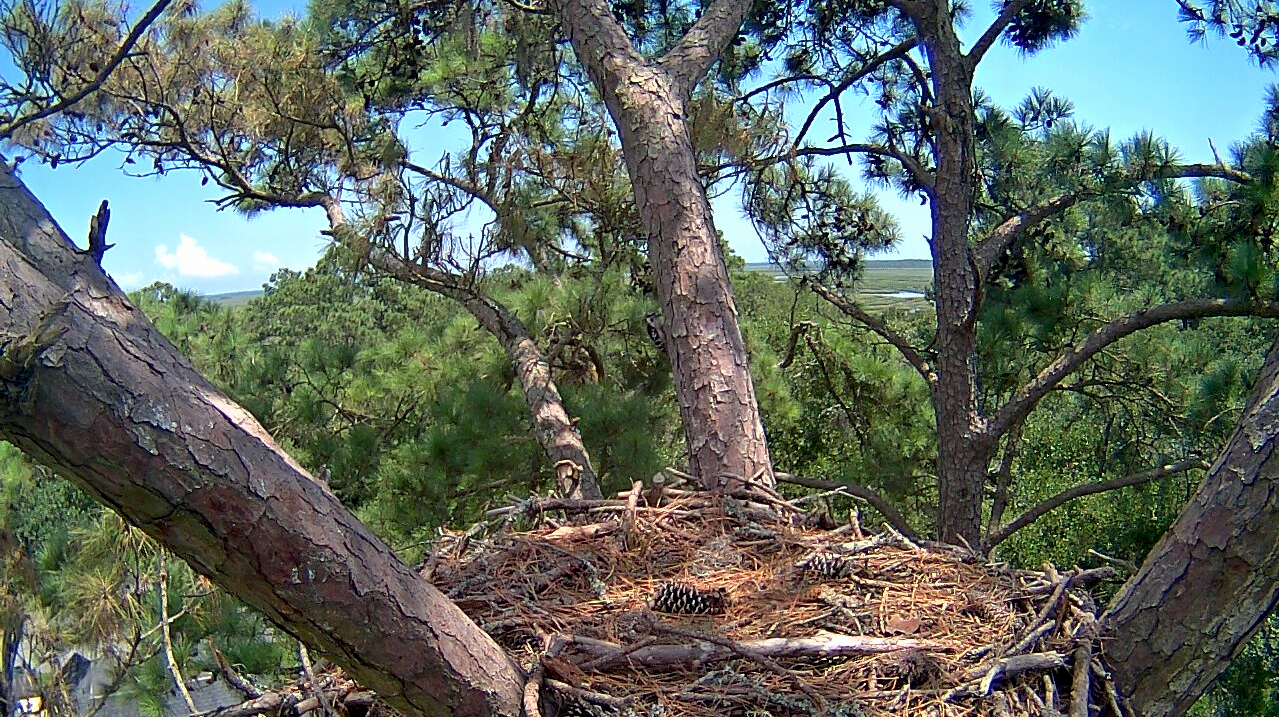 eagle nest dating Bald eagle nesting ecology and phenology eagle territories and nest sites research dating to the late 1980s found that the average number of nests per.