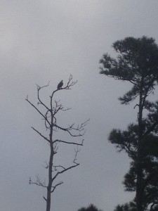 One of the Eagles just came by