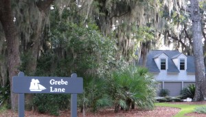 Grebe Lane 2
