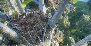 Eagle Cam 2014-10-04 at 8.32.53 AM