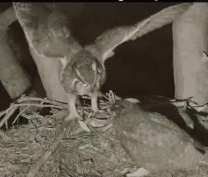 Owls Exchange Prey