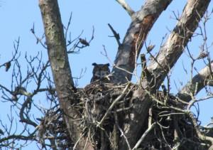 3.31 mom snake nest