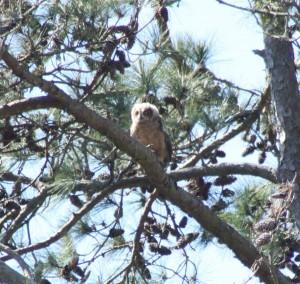 3.31 owlet branch2