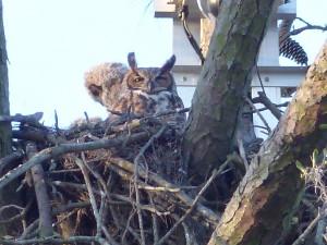 Owlet Profile