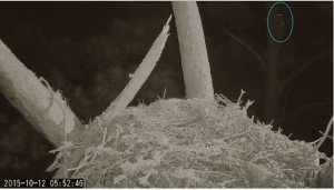 Approach Cam Catches Owl